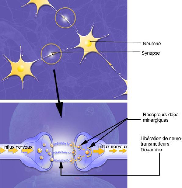 synapse_dopa.JPG
