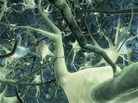 http://acces.ens-lyon.fr/acces/thematiques/neurosciences/actualisation-des-connaissances/methodes_etude_cerveau/comparaison-des-techniques/leadImage_thumb