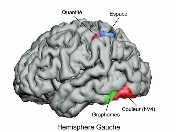 Cartographie hémisphère gauche (E. HUBBARD)