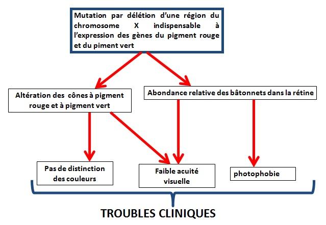 Diagramme fonctionnel