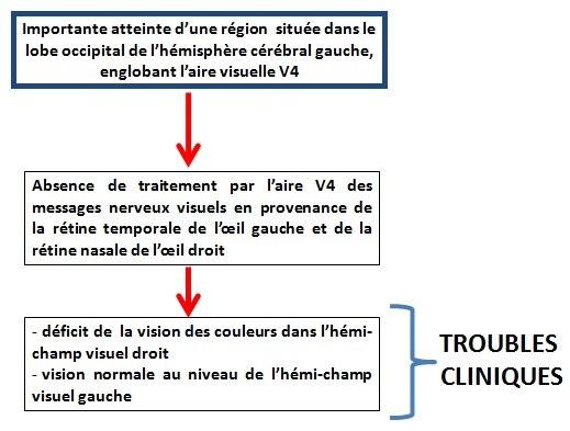 schéma fonctionnel - cas du patient 2