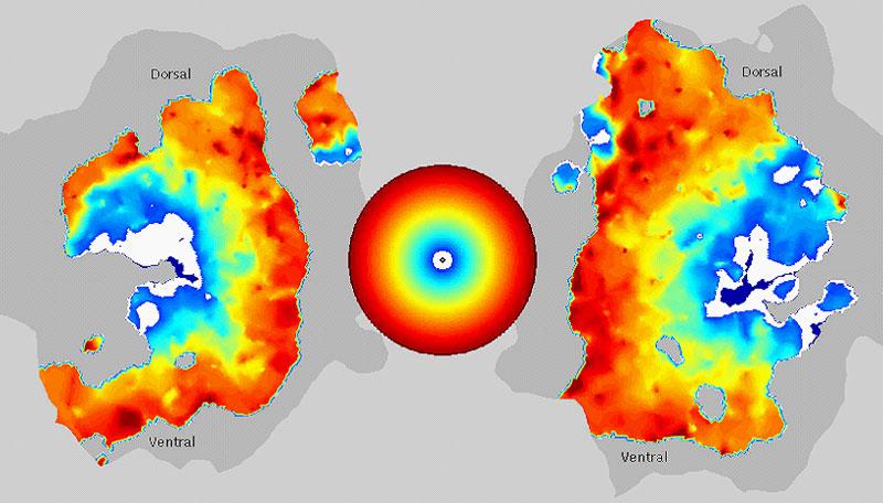 Mire circulaire et activation aires visuelles