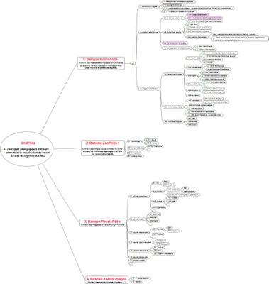 Banques d'images pédagogiques de visualisation du vivant V8.jpeg