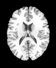 1-2 Anatomie generalites.jpg