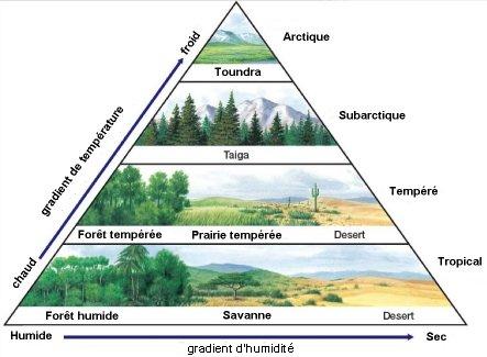 Quest Ce Quun Biome Site Des Ressources Dacces Pour Enseigner
