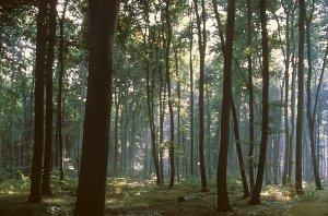 forêt-chene01.jpg