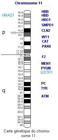 chromos11carte.jpg