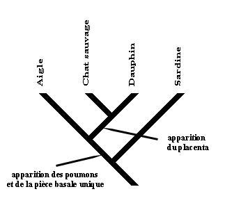 Anatomie 4ème