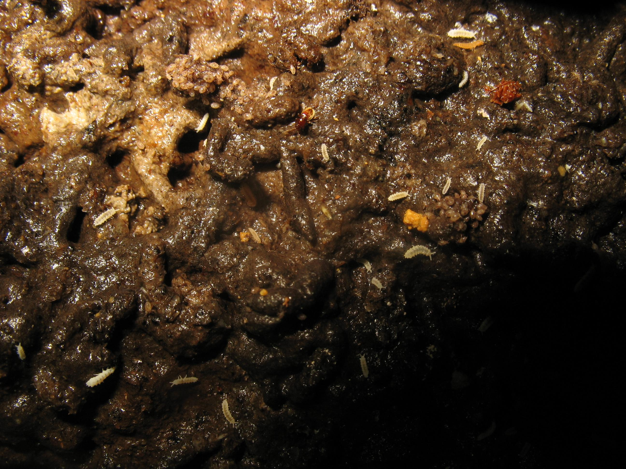Faune du guano : une photo de Bernard Lips à explorer dans le détail pour repérer différents spécimens.