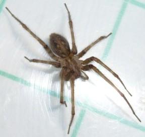 Echanges sur les araign es avec christine rollard for Araignee de maison