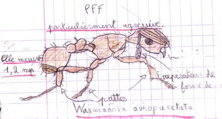 La petite fourmi de feu ou fourmi lectrique mission santo - Dessin de fourmi ...
