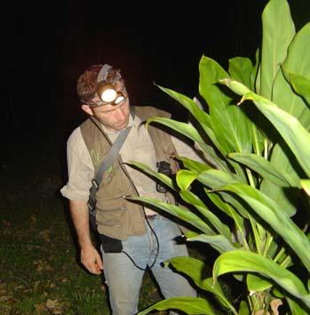 chasse de nuit - Sylvain