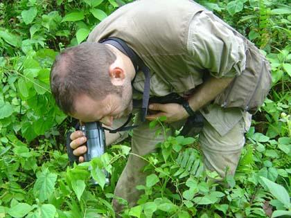 chasse de jour - Sylvain
