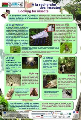 Techniques entomo