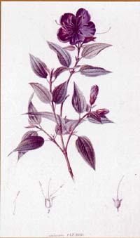 vegetalbonplandt
