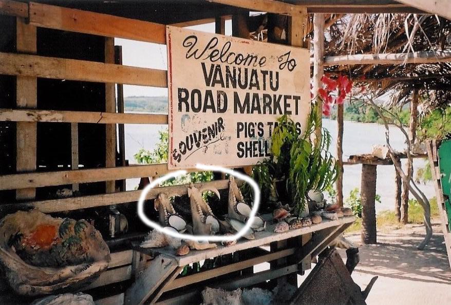 Marché : défenses de cochons sauvages (photo Marie Lory)